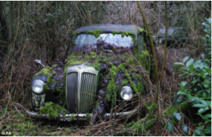 overgrown car.png